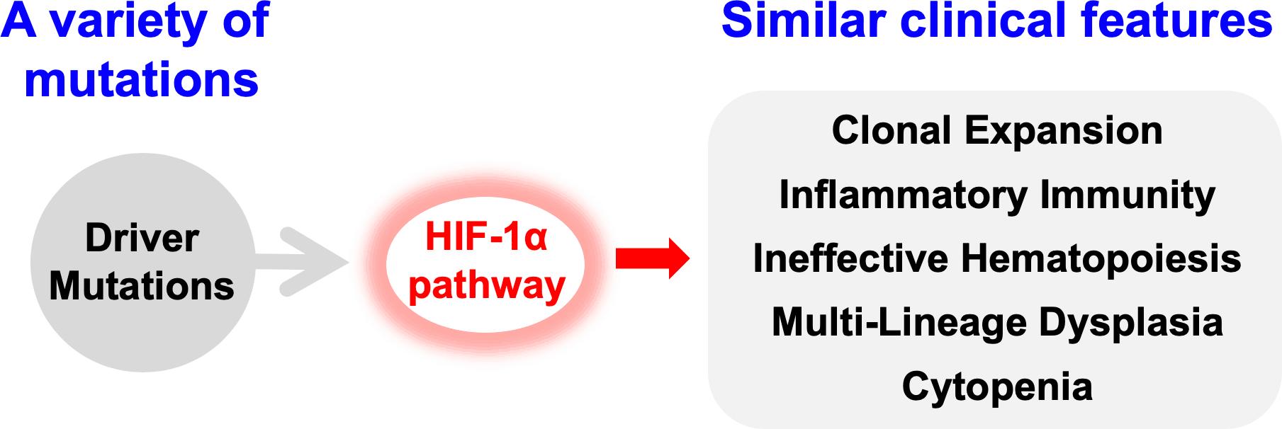 図2 HIF1Aシグナル経路